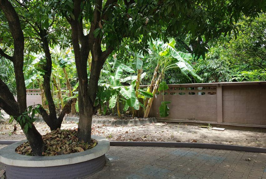 House in Sukhumvit 14 for rent - garden