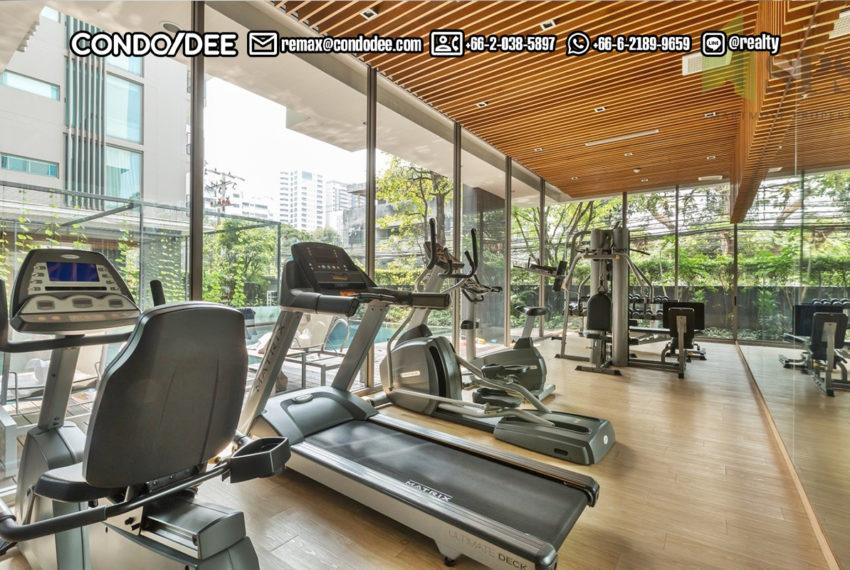 Siamese-Thirty-Nine-fitness